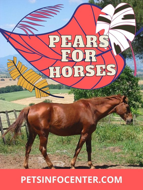 Pears For Horses? Selecting The Right Food For Your Pet