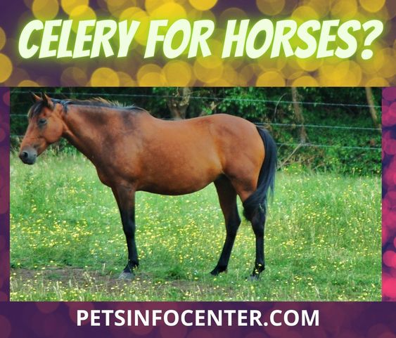 Celery For Horses? Selecting The Right Food For Your Pet