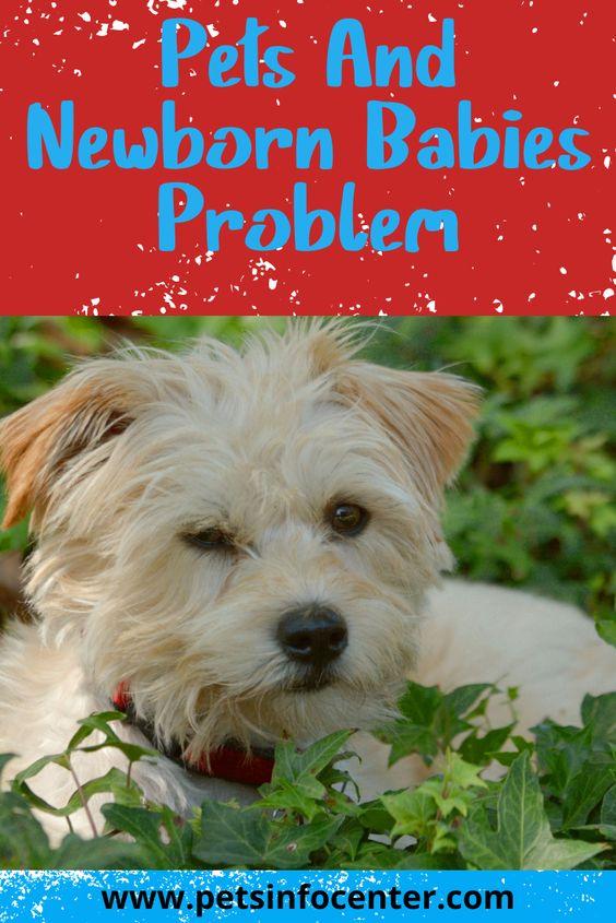 Pets And Newborn Babies Problem