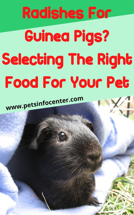 Radishes For Guinea Pigs? Selecting The Right Food For Your Pet