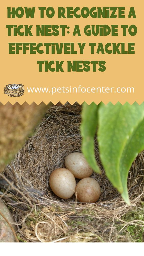 How To Recognize A Tick Nest: A Guide To Effectively Tackle Tick Nests