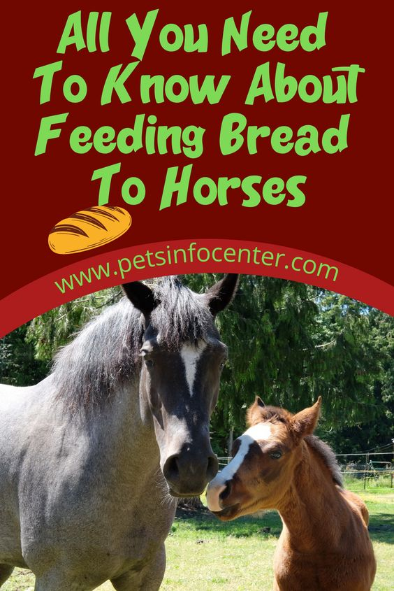 All You Need To Know About Feeding Bread To Horses