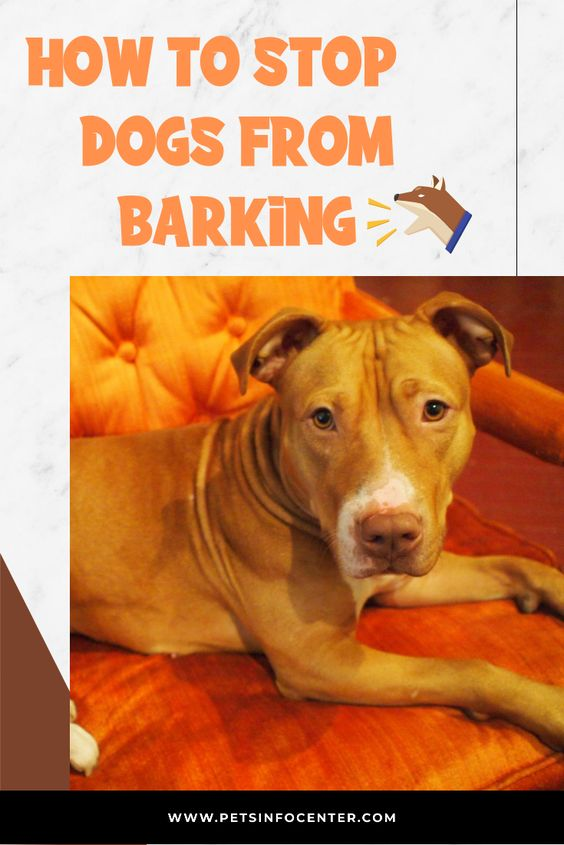 How To Stop Dogs From Barking
