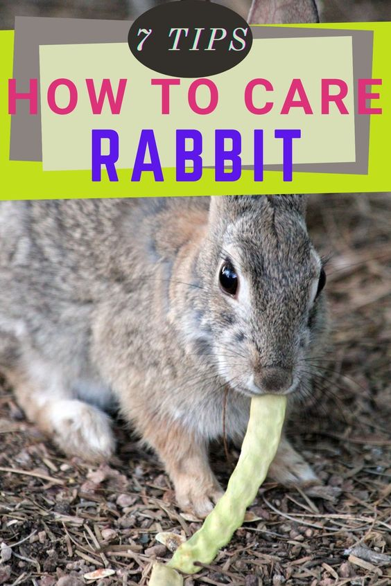 7 Tips On How To Care For Your Rabbit