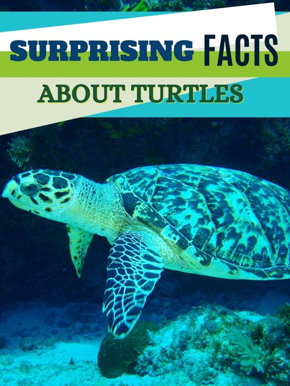 8 Surprising Facts About Turtles You Can Read Now!
