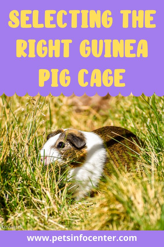Selecting The Right Guinea Pig Cage