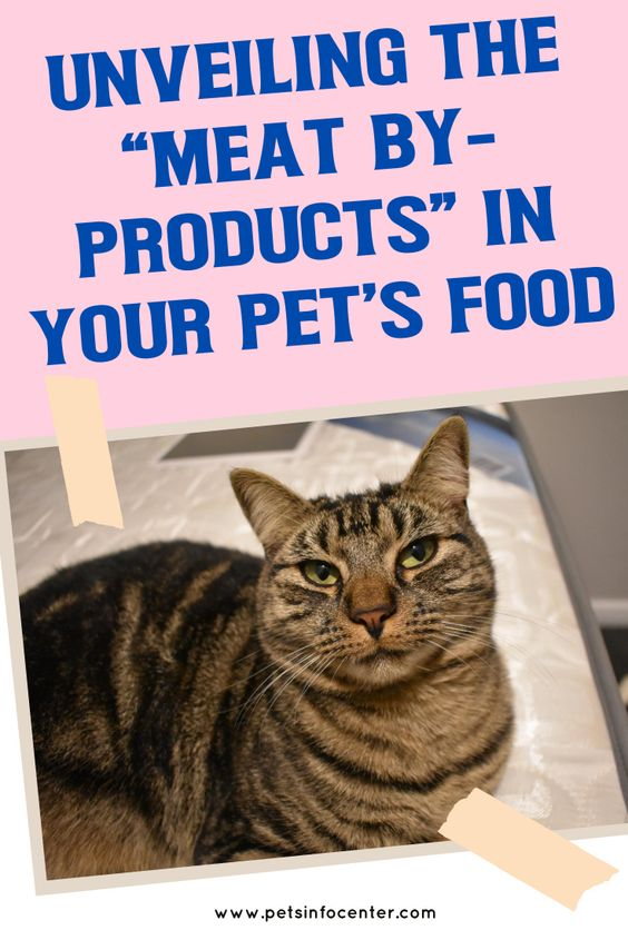 "Unveiling The ""Meat By-Products"" In Your Pet's Food"