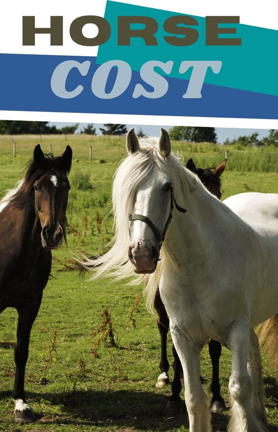 A Horse - How Much Does It Cost?