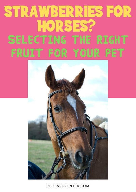 Strawberries for horses? Selecting the right fruit for your pet