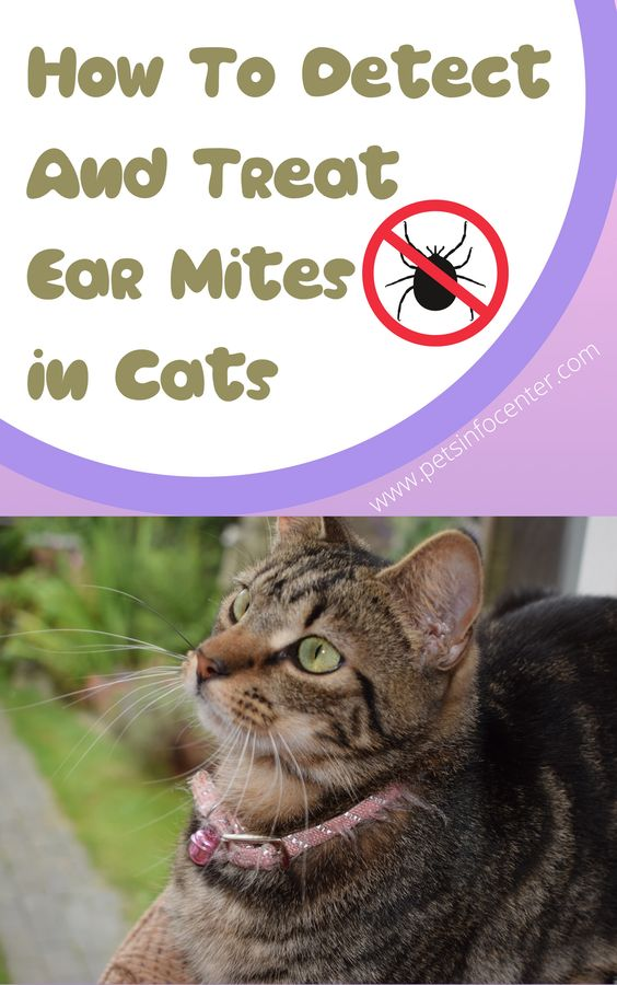 How To Detect And Treat Ear Mites in Cats