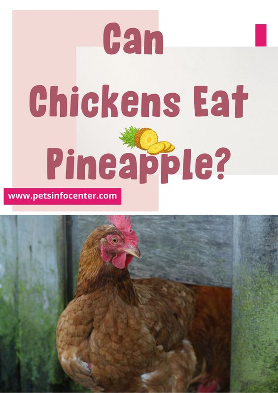 Can Chickens Eat Pineapple?