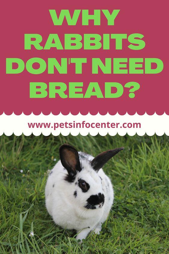 Why Rabbits Don't Need Bread?