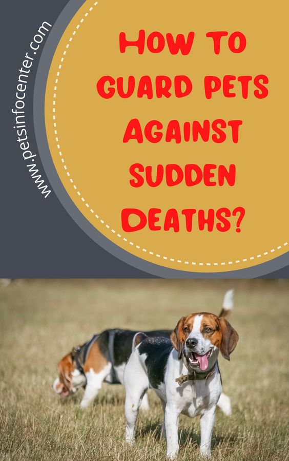 How To Guard Pets Against Sudden Deaths?