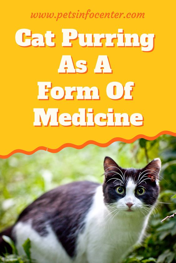 Cat Purring As A Form Of Medicine