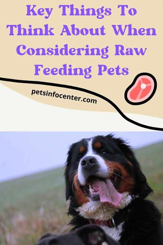 Key Things To Think About When Considering Raw Feeding Pets
