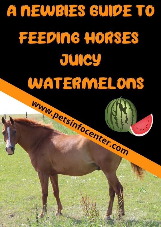A Newbies Guide To Feeding Horses Juicy Watermelons