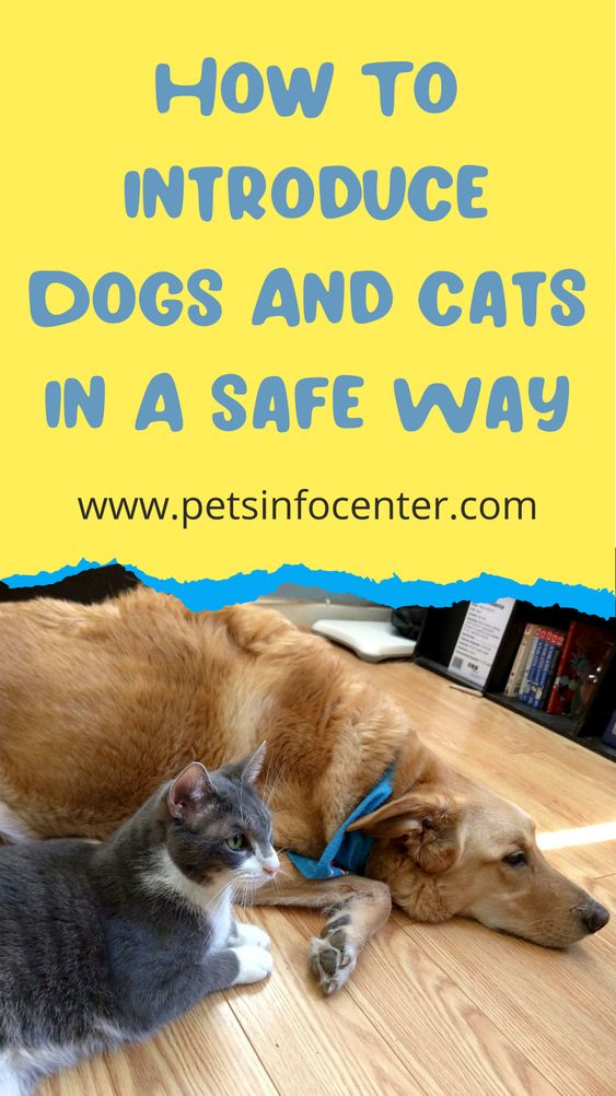 How To Introduce Dogs And Cats In A Safe Way