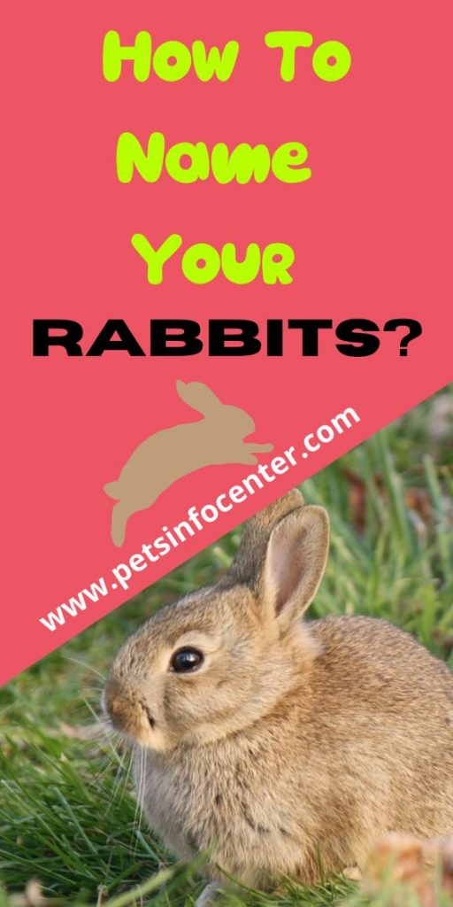 How To Name Your Rabbits?