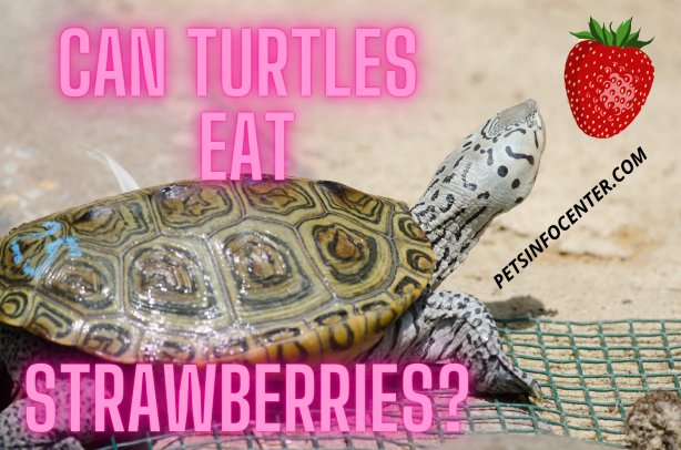 Can Turtles Eat Strawberries_