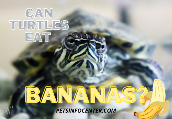 Can Turtles Eat Bananas