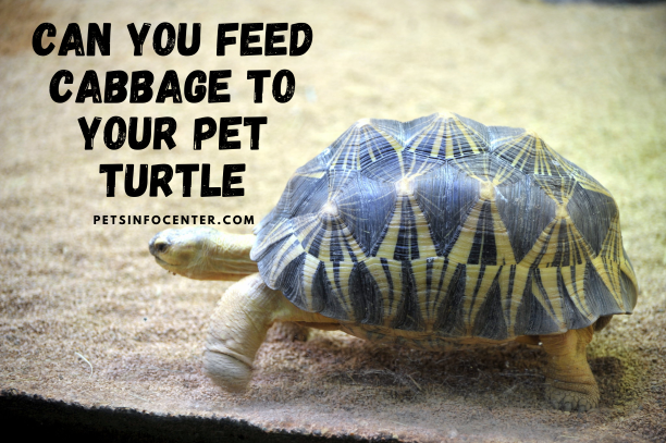 Can You Feed Cabbage to Your Pet Turtle