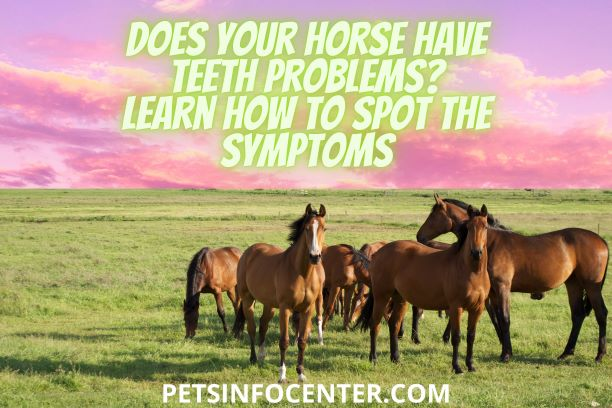 Does Your Horse Have Teeth Problems_ Learn How To Spot The Symptoms