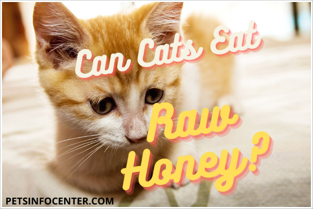 Can Cats Eat Raw Honey