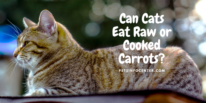 Can Cats Eat Raw or Cooked Carrots_