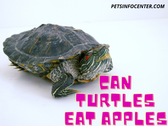 Can Turtles Eat Apples