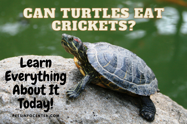 Can Turtles Eat Crickets_