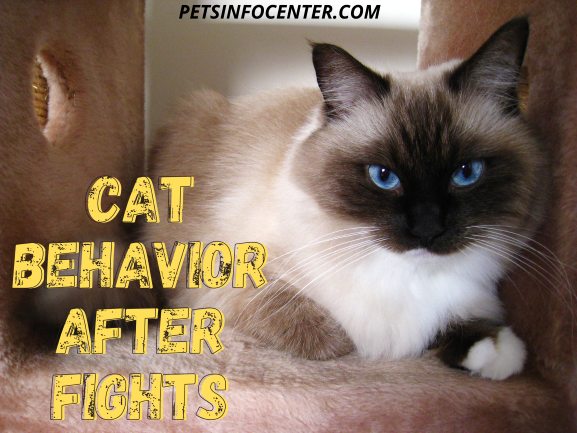 Cat Behavior After Fights