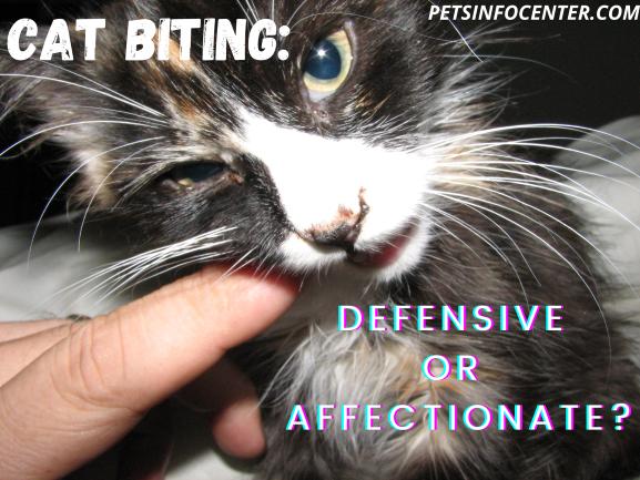 Cat Biting_