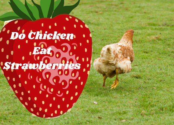 Do Chicken Eat Strawberries_