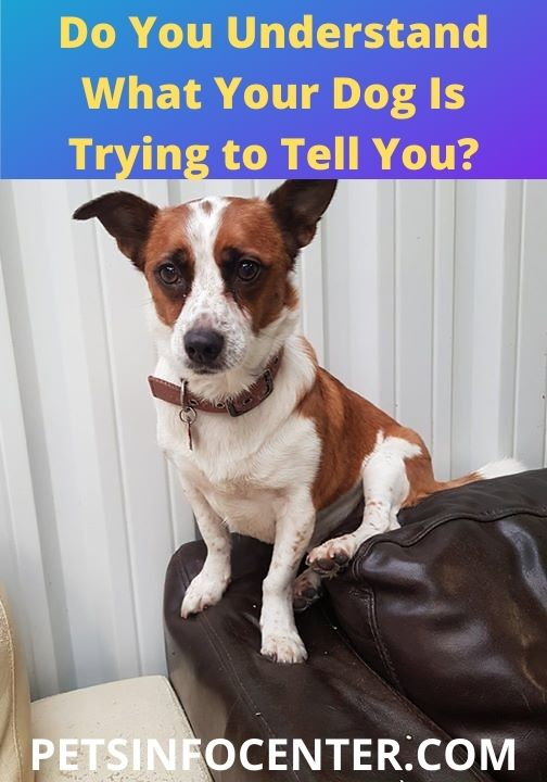 Do You Understand What Your Dog Is Trying to Tell You_