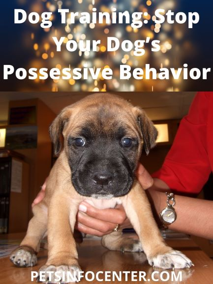 Dog Training_ Stop Your Dog's Possessive Behavior