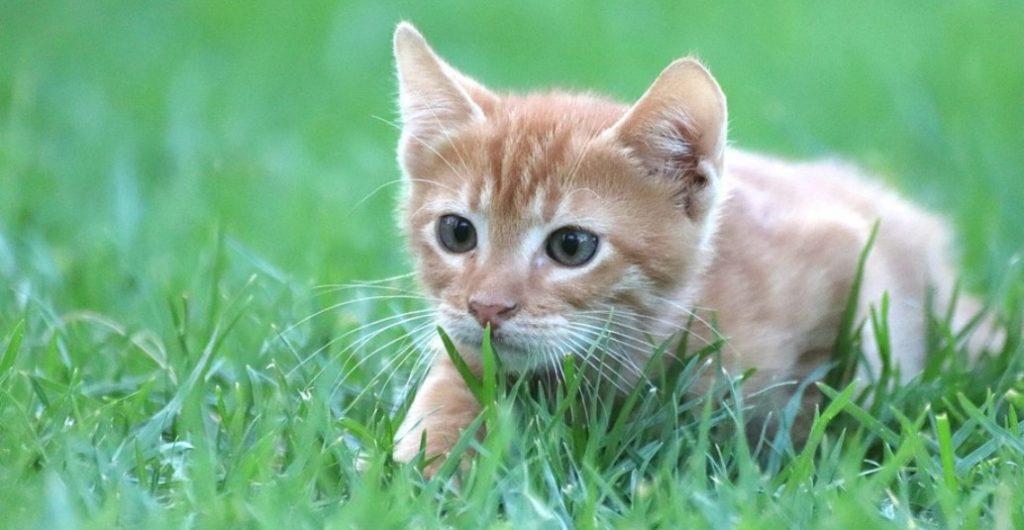should cats eat grass