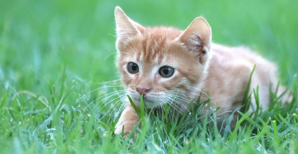 should cats eat grass
